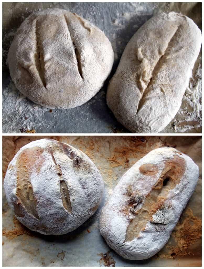 liquid sourdough starter bread success!