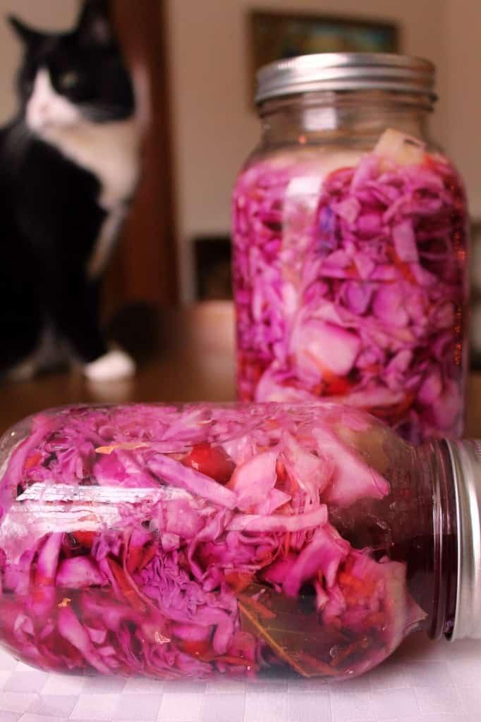 cat wacthes over quick-pickled sauerkraut