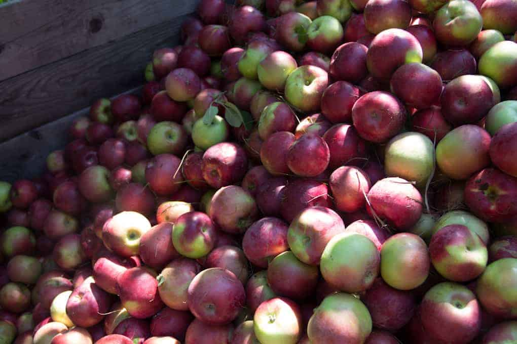 Apple picking and Quebec fall11