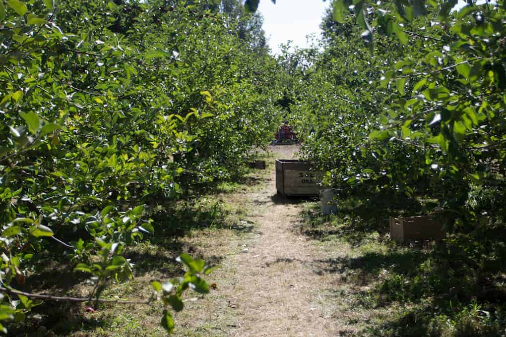 Apple picking and Quebec fall22