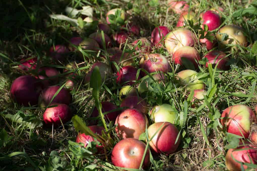 Apple picking and Quebec fall3
